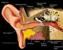 Types of Tinnitus - Why Do I Hear Ringing In My Ears