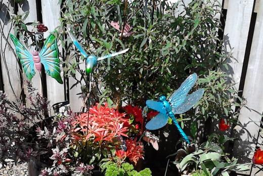 The mini garden