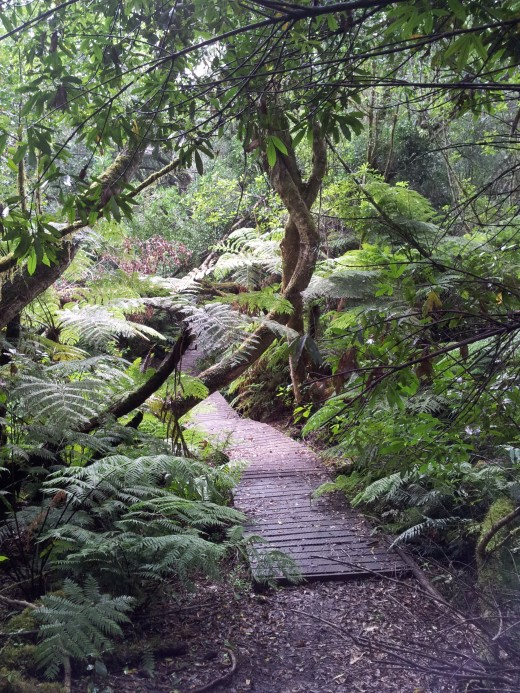 A walk in the Knysna Forest really is this magical!
