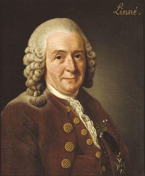 Carl von Linné, better known as Carolus Linnaeus