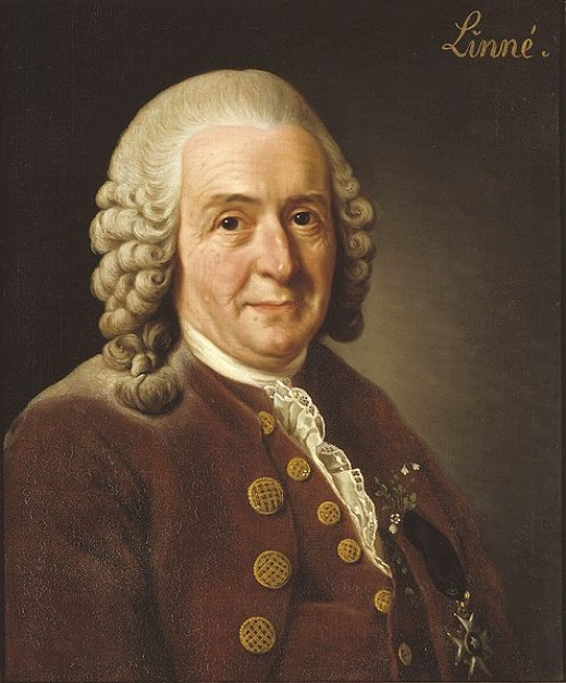 Carl von Linné, better known as Carolus Linnaeus