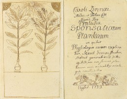 Pollination depicted in one of Linnaeus'  works.