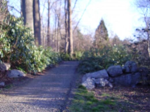 Walking path at the Connecticut College Arboretum