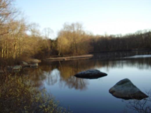 The pond at The Connecticut College Arboretum