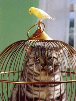 All about canaries: How to purchase a canary