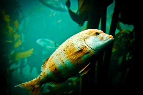 Cool Freshwater Fish