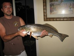 Saltwater Fishing: Mexico Beach, Florida