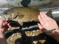 Early May, 2012 Catching Smallmouth Bass On The Creek
