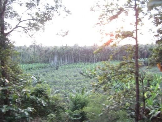 Land side
