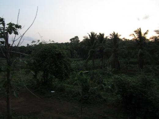 Evening Capture