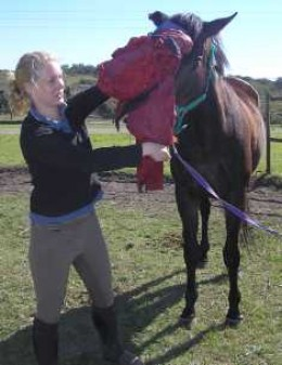 Learn how to train a horse the natural way