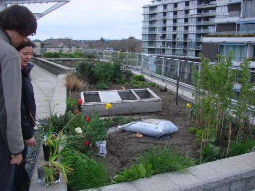 Image of Melinda's rooftop garden.