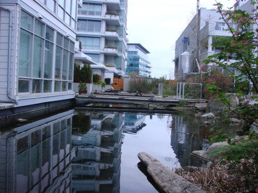 Storm water catchment turned into beautiful ponds and habitat outside of Dockside Green.