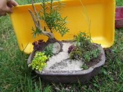 Beginnings of a miniature, container fairy garden.