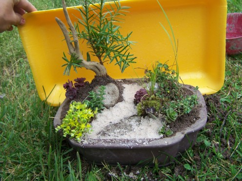 Beginnings of a miniature, container fairy garden.