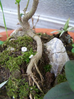 Miniature Fairy Garden Tutorial. Make sure to add detail by allowing the tree roots to remain visible.
