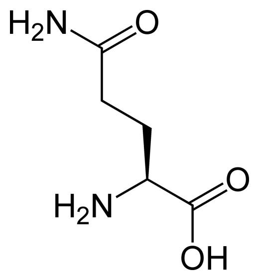 L-Glutamine Amino Acid