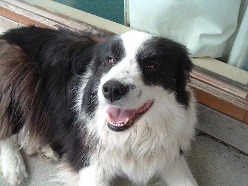 Bobby the dog from Greyfriars Vineyard.