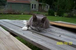 My daughter's cat, Triella.