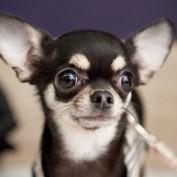 Petfriends profile image