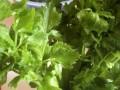 Celery and sunlight