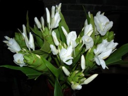 Butterfly Lily. Its fragrant clusters  are either white or pink blooms, resembling butterflies This plant likes full sun to part shade Grows: 3 to 6 feet with a spread: 2 to 3 feet