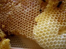 Real all natural honey comb.