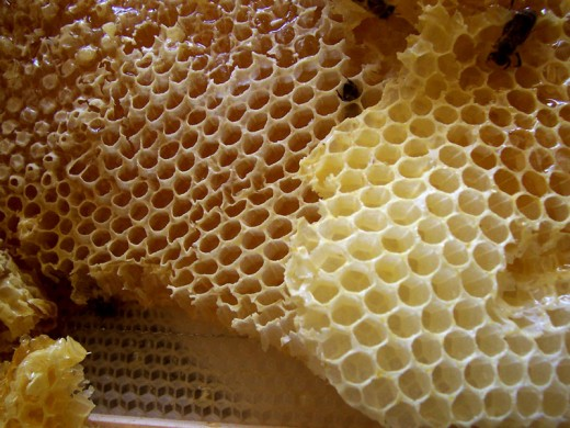 Real all natural honey comb.