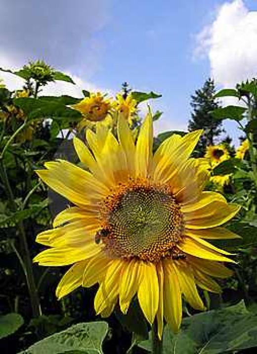 Happy Gardening!!