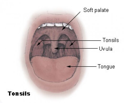 Just in case you've ever wondered what your uvula looks like!