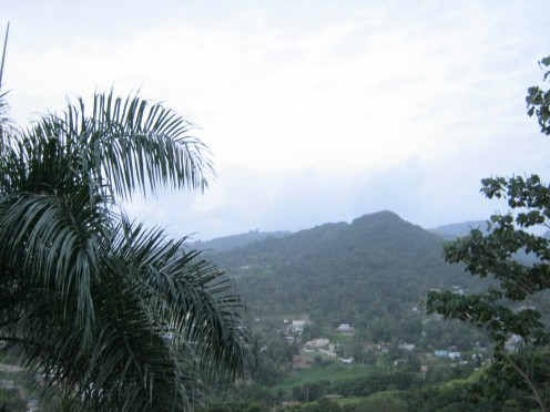Looking To The Yunque Rain Forest