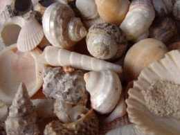 Assortment of sea shells