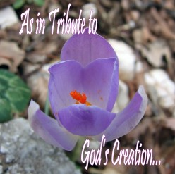 As in Tribute to God's creation...