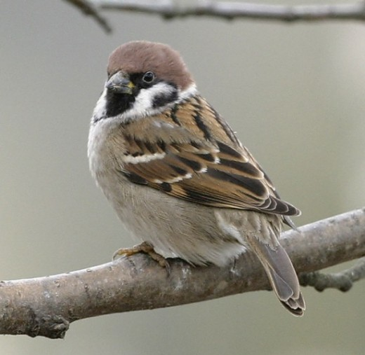 My sparrow form, maybe