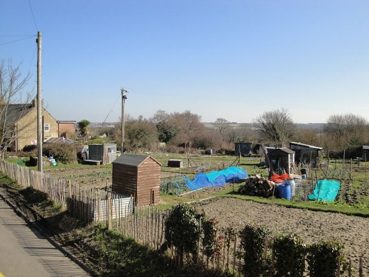 Allotments like this one are currently maintained by people who enjoy gardening as a hobby. But in a post oil world, they will become vital lifelines.