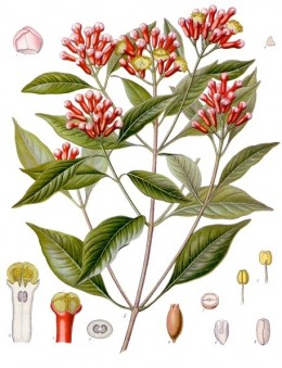 Natural Herbal Remedies, Cloves