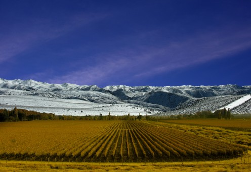 Vineyards with the Andes Mountains in the Background