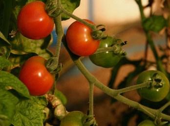 Having a garden makes eating healthy so easy!