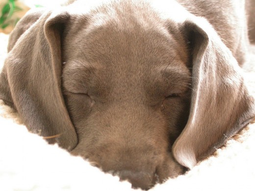 Letting sleeping dogs lie can be wise, but when we're the sleeping pup who isn't getting wiser, it might keep us mired in depression or negativity.