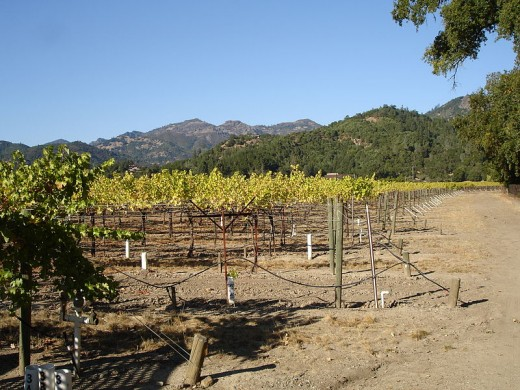 Some of the vineyards at Sterling Vineyards and Winery in the Napa Valley of Northern California.