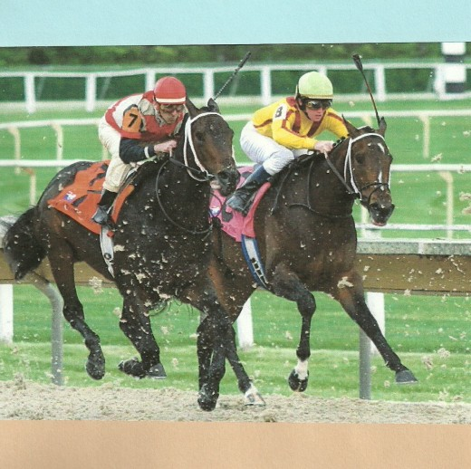 Dirt flies as two Thoroughbreds menace each other to the finish wire.