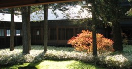 An offset autumn maple, at Tamozawa villa, Nikko, Japan.