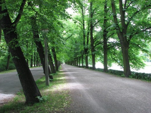 Midday in summer, trees march along a river, Leipzig, Germany.