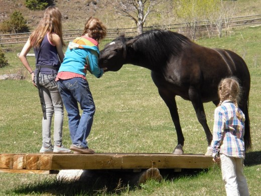 Love, carrots and practice let the horse overcome fear and step on the teeter-totter.