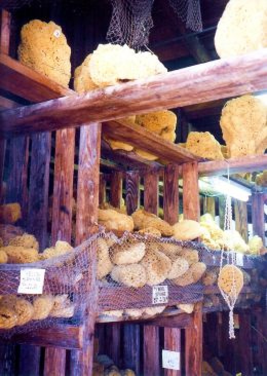 Sponges in Tarpon Springs, Florida
