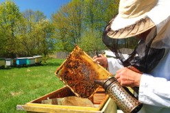 Start Your Own Honey Business: Beekeeping for Beginners