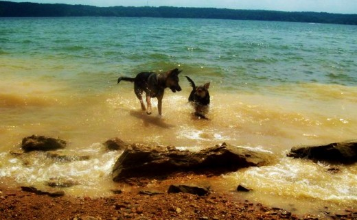My dogs, Fiona and Penny, enjoying a day at the beach.