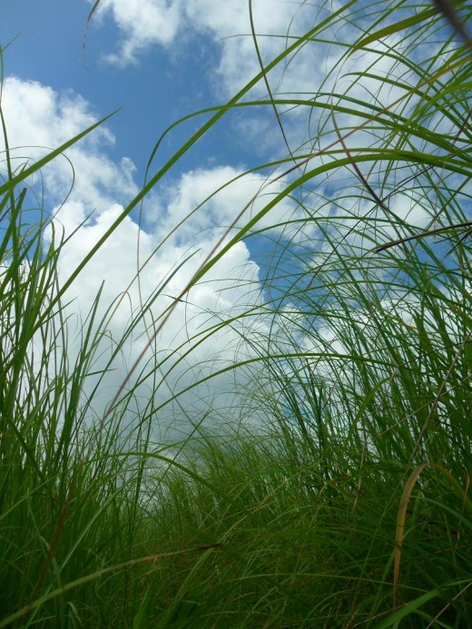 He keeps on stretching his neck but the talahib grasses were tall that he's unable to spot his friends.