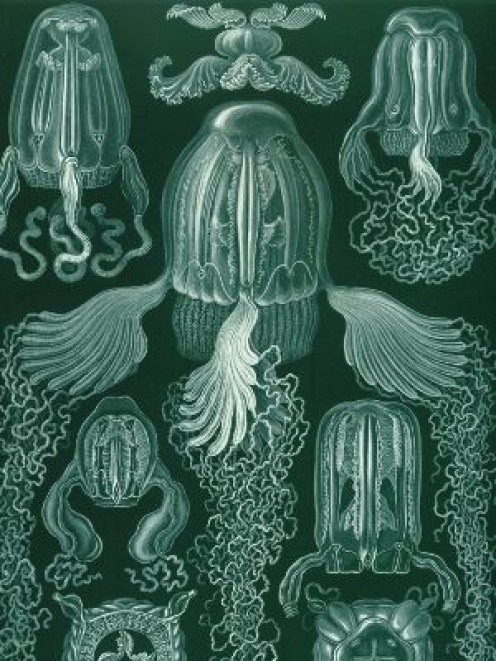 Photo Taken by Ernst Haeckel