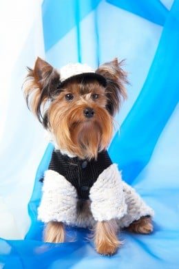 Free Crochet Patterns For Yorkies : Finding Free Crochet Patterns for Pet Clothes